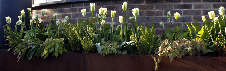 spring bulbs provide seasonal interest