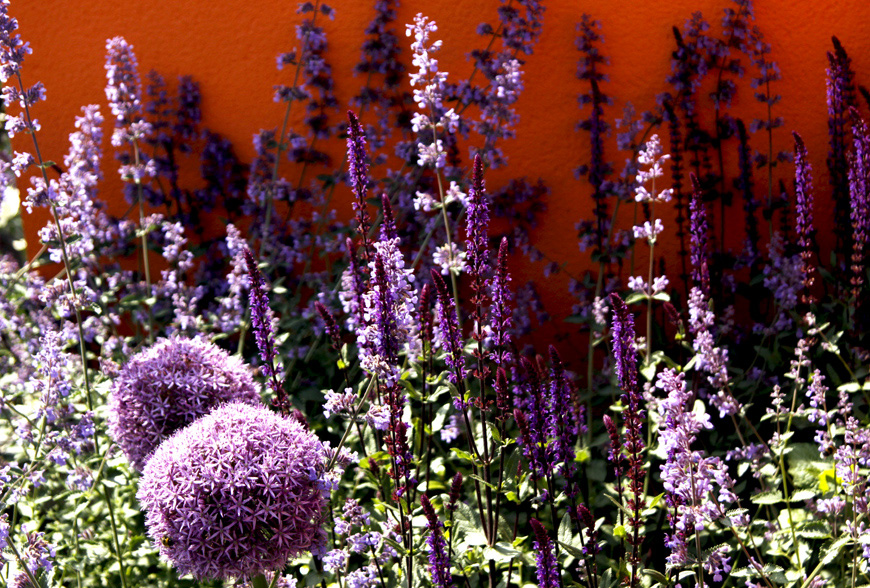 allium and nepeta mix