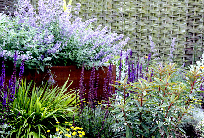 greencube planting includes Euphorbia, Salvia and Hakonechloa, Great Walsingham, Norfolk